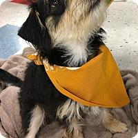 Adopt A Pet :: Diamond - Schaumburg, IL