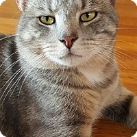 Adopt A Pet :: KITTY - Raleigh, NC