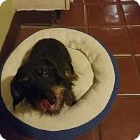Adopt A Pet :: Hallie-Adoption Pending - Marcellus, MI