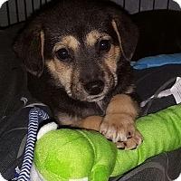 Adopt A Pet :: Prim - Monroe, NC