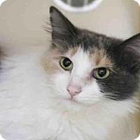 Adopt A Pet :: MACY - Pittsburgh, PA