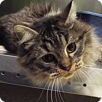Adopt A Pet :: Molly - Grants Pass, OR