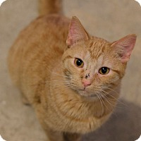 Adopt A Pet :: Dudley - Geneseo, IL