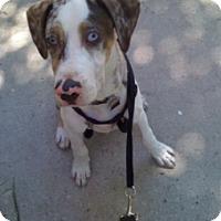 Adopt A Pet :: Sonny - Wattertown, MA
