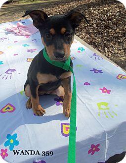 Terrier (Unknown Type, Medium) Mix Puppy for adoption in Waldorf, Maryland - Wanda #359