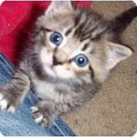 Adopt A Pet :: Tug - Colmar, PA