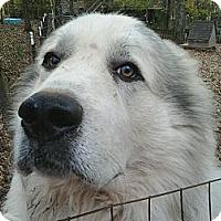 Adopt A Pet :: Brody - Albany, NY