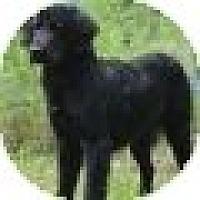Adopt A Pet :: Holly - Denver, CO