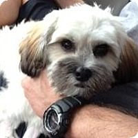 Adopt A Pet :: DIMPLES - Pembroke pInes, FL