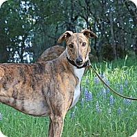 Adopt A Pet :: Walt - Santa Rosa, CA