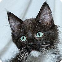 Adopt A Pet :: Zorro M - Sacramento, CA