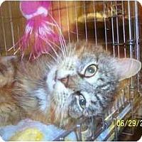 Adopt A Pet :: Gideon - Syracuse, NY