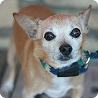 Adopt A Pet :: Rocky - Canoga Park, CA