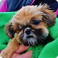 Adopt A Pet :: Yoga - Schofield, WI