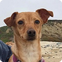 Adopt A Pet :: Penelope - San Francisco, CA