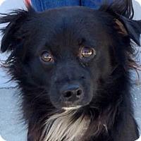 Adopt A Pet :: WESTON (video) - Los Angeles, CA