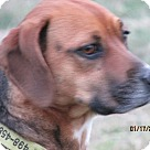 Adopt A Pet :: Daphne Moon