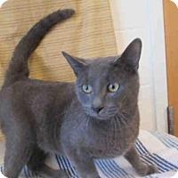 Adopt A Pet :: A437037 - Upper Marlboro, MD