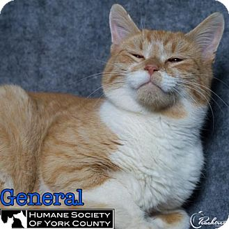 Domestic Mediumhair Cat for adoption in Fort Mill, South Carolina - General