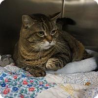 Adopt A Pet :: Ally - Wyandotte, MI