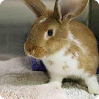 Adopt A Pet :: MEL - San Francisco, CA
