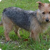 Adopt A Pet :: Mardi - Brunswick, ME