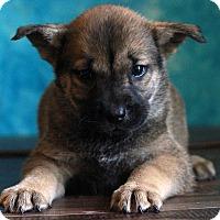 Adopt A Pet :: Jasper - Waldorf, MD