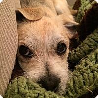 Adopt A Pet :: Jack Jack - Boise, ID