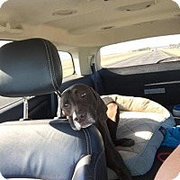 Adopt A Pet :: Charley - Menlo Park, CA