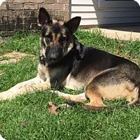 Adopt A Pet :: Bendi - Baton Rouge, LA