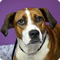 Adopt A Pet :: Gia - Westfield, NY