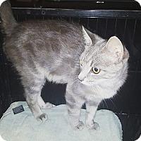 Adopt A Pet :: Cinder - Lexington, KY