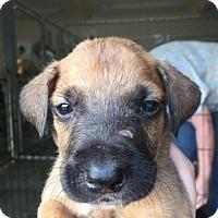 Adopt A Pet :: MAX - wolfeboro, NH