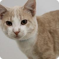Adopt A Pet :: Heath - Medina, OH