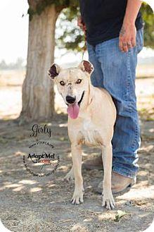 Fila Brasileiro Mix Dog for adoption in Visalia, California - Girly