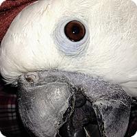 Adopt A Pet :: Aspen - Shawnee Mission, KS
