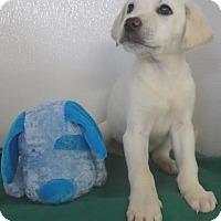 Adopt A Pet :: Twister - Manning, SC