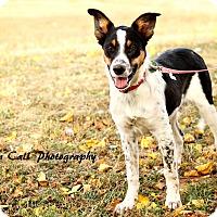 Adopt A Pet :: Asia - Allen, TX