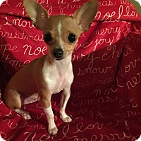 Adopt A Pet :: Belle - Flossmoor, IL