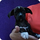 Adopt A Pet :: Dozer