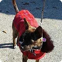 Adopt A Pet :: Dayna - Summerville, SC