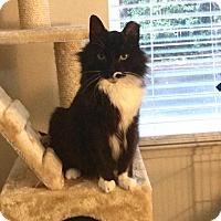 Adopt A Pet :: Tux - Campbell, CA