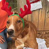 Golden Retriever Mix Dog for adoption in Pompton Lakes, New Jersey - Roxy