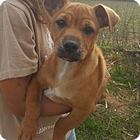 Adopt A Pet :: Bruce - Plainfield, CT