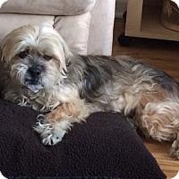 Adopt A Pet :: John-Pending Adoption - Lancaster, PA