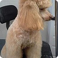 Adopt A Pet :: Gram - Cincinnati, OH