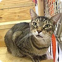 Adopt A Pet :: Tiger (Tigger) - St. James City, FL
