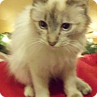 Adopt A Pet :: November - Ennis, TX