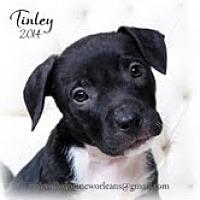Adopt A Pet :: Tinley - Metairie, LA