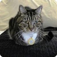 Adopt A Pet :: Seiko - Vancouver, BC
